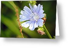 Single Blue Flower Greeting Card by Stephanie Grooms