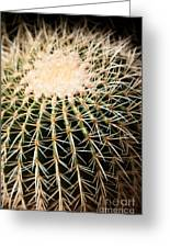 Single Cactus Ball Greeting Card