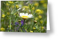 Single Daisy In A Field Greeting Card