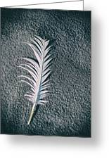 Single Feather Greeting Card