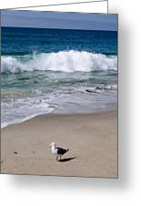 Single Seagull On The Beach Greeting Card