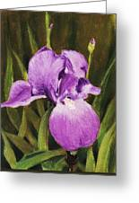 Single Iris Greeting Card