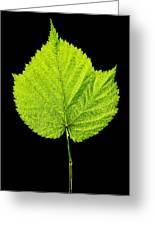 Single Leaf From Raspberry Bush Greeting Card