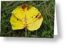 Single Leaf Greeting Card