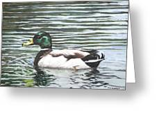 Single Mallard Duck In Water Greeting Card