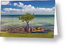 Single Mangrove Tree In The Gulf Greeting Card