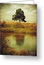 Single Pine Tree Greeting Card by Carlos Caetano