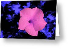 Single Pink Cactus Flower Greeting Card