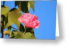 Single Pink Flower Greeting Card
