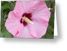 Single Pink Greeting Card