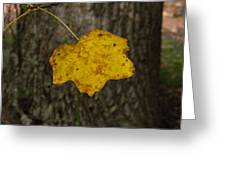 Single Poplar Leaf Greeting Card