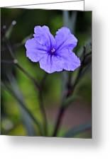 Single Purple Mexican Petunia Ruellia Brittoniana Greeting Card