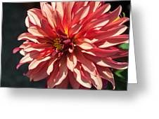 Single Red Bloom Greeting Card