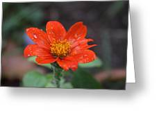 Single Red Flower For A Cure Greeting Card