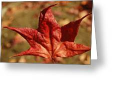 Single Red Maple Leaf Greeting Card