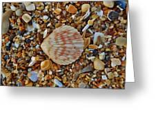 Single Shell Hatteras Island 17 9/3 Greeting Card