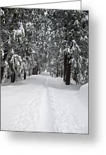 Single Track Cross Country Skiing Trail Yosemite National Park Greeting Card