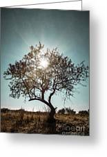 Single Tree Greeting Card