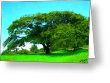 Single Tree In Spring Greeting Card