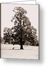 Single Tree Journey Greeting Card