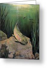 Single Trout Greeting Card