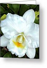 Single White Cattleya Orchid Greeting Card