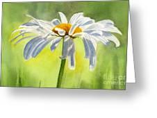 Single White Daisy Blossom Greeting Card by Sharon Freeman