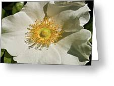 Single White Rose Db Greeting Card