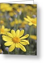 Single Yellow Daisy Greeting Card