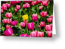 Single Yellow Tulip Greeting Card