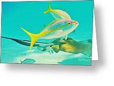 Singray City Cayman Islands Three Greeting Card