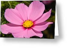 Singular Pink Cosmos Greeting Card