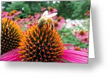 Sip Of Nectar Greeting Card