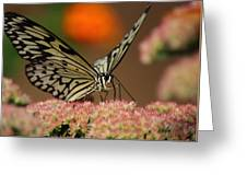 Sip Of The Nectar Greeting Card