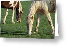 Sister Horses Greeting Card