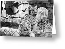 Sisters Black And White Greeting Card
