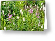Sitka Burnet And Tall Fireweed In Katmai National Preserve-ak Greeting Card