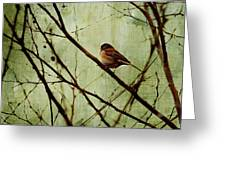 Sittin' In A Tree Greeting Card