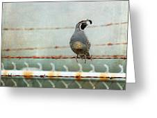 Sittin' On The Fence Greeting Card