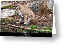 sitting Cougar Greeting Card