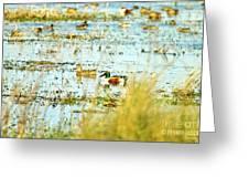 Sitting Ducks Greeting Card