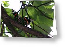 Sitting On A Branch Greeting Card