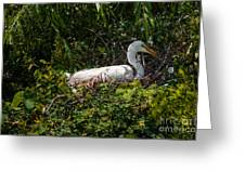 Sitting On The Nest Greeting Card