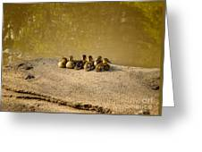 Six Ducklings In A Row Greeting Card