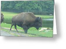 Six Flags Great Adventure - Animal Park - 121213 Greeting Card
