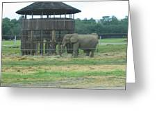 Six Flags Great Adventure - Animal Park - 121221 Greeting Card