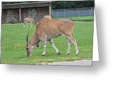 Six Flags Great Adventure - Animal Park - 121235 Greeting Card