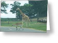 Six Flags Great Adventure - Animal Park - 121239 Greeting Card