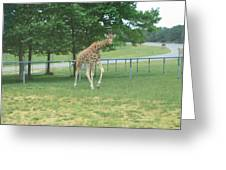 Six Flags Great Adventure - Animal Park - 121243 Greeting Card