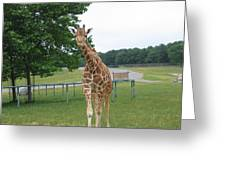 Six Flags Great Adventure - Animal Park - 121244 Greeting Card